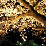 芦屋川桜祭り